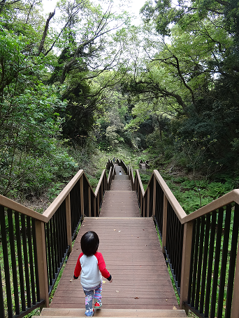 子綱代の森歩道